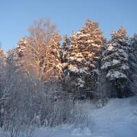 Январские каникулы